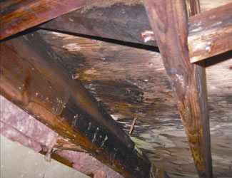 mold and rot in a North Little Rock crawl space